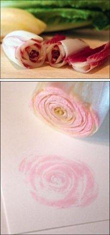cykoria = stępelek = róża .