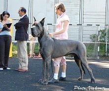 Apollo wśród psów! Najpiękniejsza rasa jaką widziałam :D Jeszcze troszkę i adpotuję dwa piękne okazy ;-)