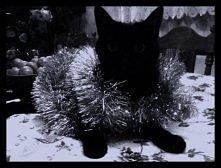 Christmas Kitty <3