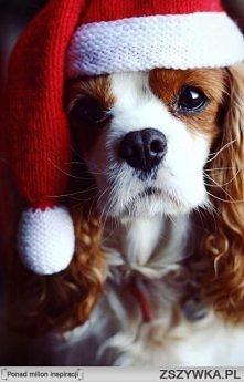 Hohoho! Wesołych Świąt!
