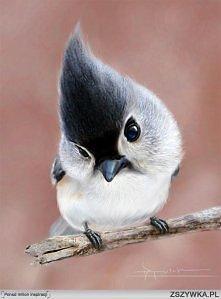 Ptaszyna!