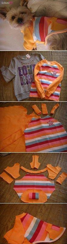 ubranko dla pupila ze starej bluzki:D