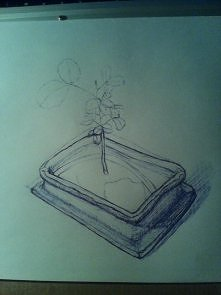 1/2 szkicu drzewka