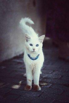 piękny kotek, uszanowanko