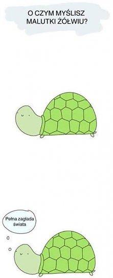 o czym myślisz malutki żółw...