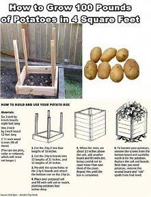 sposób na ziemniaki