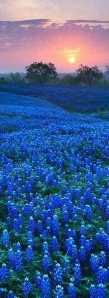 kwiatowe pole