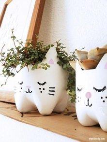 Butelkowe kotki :)