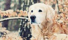 Z psem w zimowy dzień zabawa to świetna sprawa! ;)