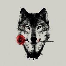 Róża / wilk