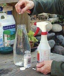 Dwie tabletki aspiryny rozpuszczone w wodzie ,działają grzybobójczo na rośliny.