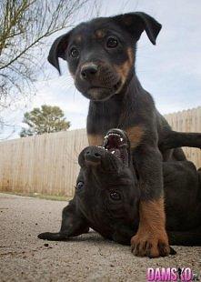 jakie słodkie psiaki ;)