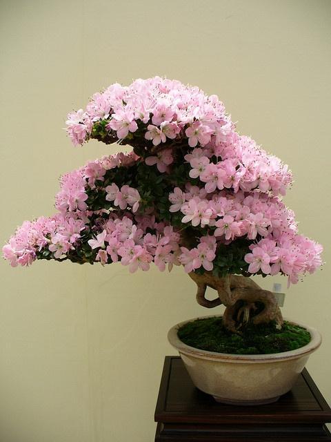 انتيكآ وجمال الورد 9506--wisnia-.jpg