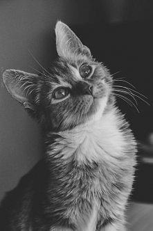 Czasem mam wrażenie, że mój kobiecy świat rozumie tylko mój kot :)