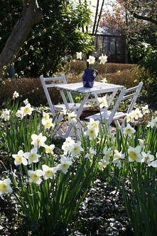 *** wiosna w ogrodzie ***