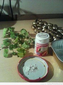 Roślinki - pelargonie rabatowe - w muszelkach, przygotowania