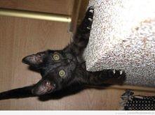 Kociak ambitny ... teraz na starość w domu głównie śpi ^^