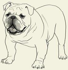 #jak narysować psa ;)