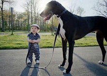 Duży pies i mały bobas :)  ...