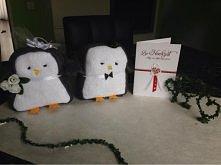 Pingwinki z ręczników ( mło...