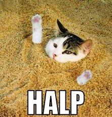 Kotek prosi o pomoc