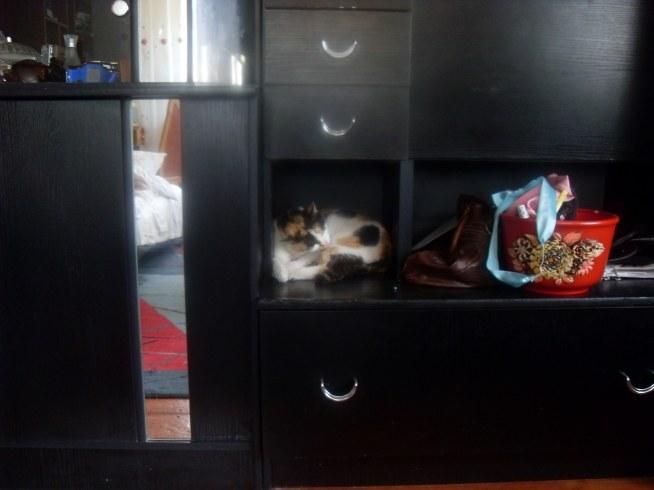 Czy Tylko Mój Kot Leży Na Wszystkich Meblach Jakie Są W Domu Xd Na