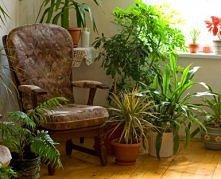 7 domowych sposobów na poprawę kondycji kwiatów doniczkowych;  woda mineralna- odżywia rośliny a zawarty w niej dwutlenek węgla zapobiega powstawaniu białego osadu na ziemi i do...