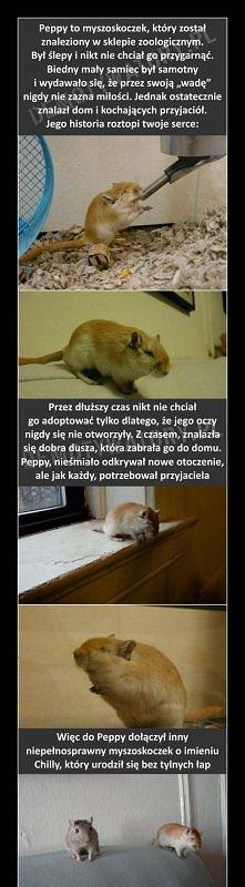 Peppy <3