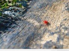 10 z 22 czerwony pajęczak ^^