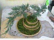 22 z 22. przesadzone drzewko :D
