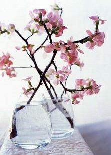wiosna w wazonie