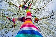 drzewo tęcza
