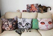 poduszki koty :D