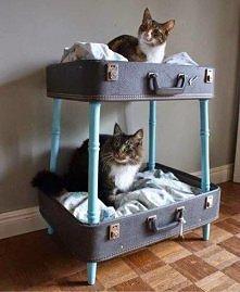 DIY z walizki dla kota