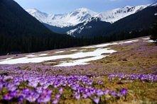 Śladami Jana Pawła II. Dolina Chochołowska, najwieksza i najdłuższa w Tatrach. Niezapomniane widoki, liczne jaskinie, zapierajaca dech w piesiach przyroda jest z pewnoscia warta...