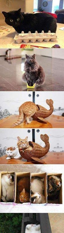 """Dziwne """"kryjówki"""" kotów :)"""