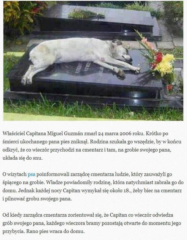 Pies Najlepszym Przyjacielem Na Cytaty Fotografie I