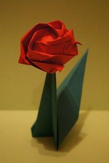 Róża Kawasaki