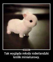 królik ♥