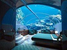 Spać z rybkami .. Ktoś chciałby ?