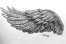 Piękne skrzydła *-*