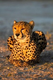piękno Afryki
