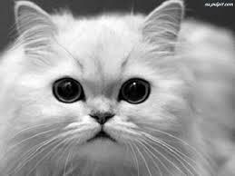Czy te oczka mogą kłamać ?? :*