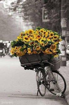 Słoneczniki  Są wyrazem sza...