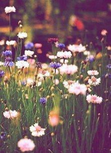 kwiatuszki na łące :p