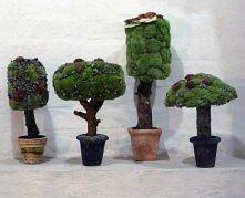 Topiary z mchu i twórczej i...