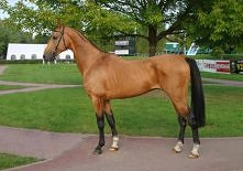 koń achał-tekiński