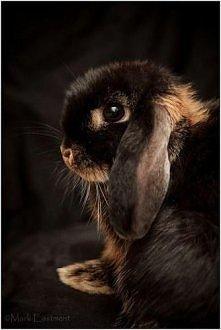 sweet bunny :)