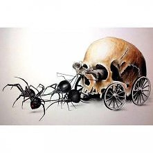 czaszka *.*