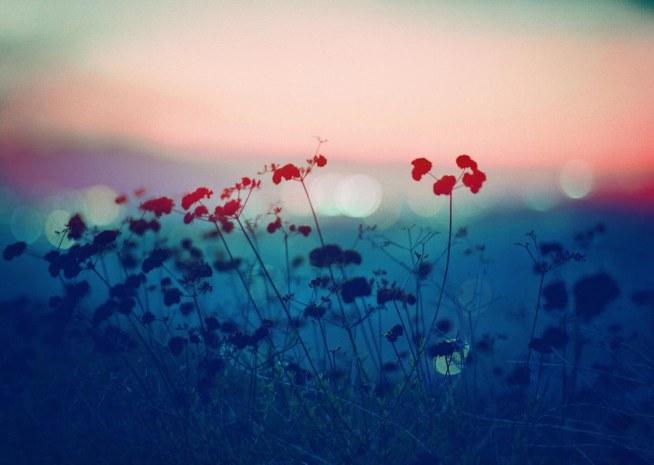 Landscapes, 2014 | by Anthony Samaniego